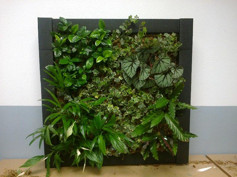 Jardines verticales y cubiertas vegetales auto design tech - Jardines verticales plantas ...