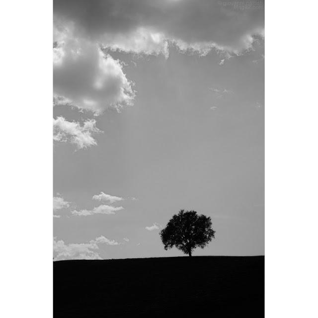 Fotografia di albero su collina con nuvole