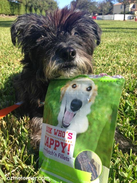 Look Who's Happy Fetch'n Fillets make Oz the Terrier a happy dog