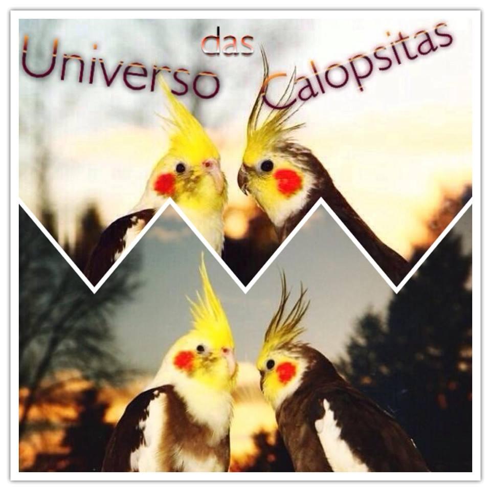 Divulgação - Universo das Calopsitas - Fan Page