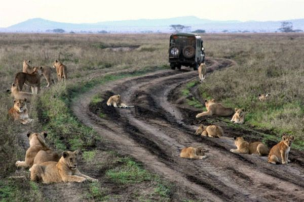 Image result for Περιοχή Serengeti, Τανζανία