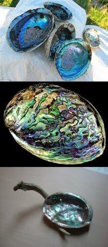 Conchas de Abalone.e outras especies...