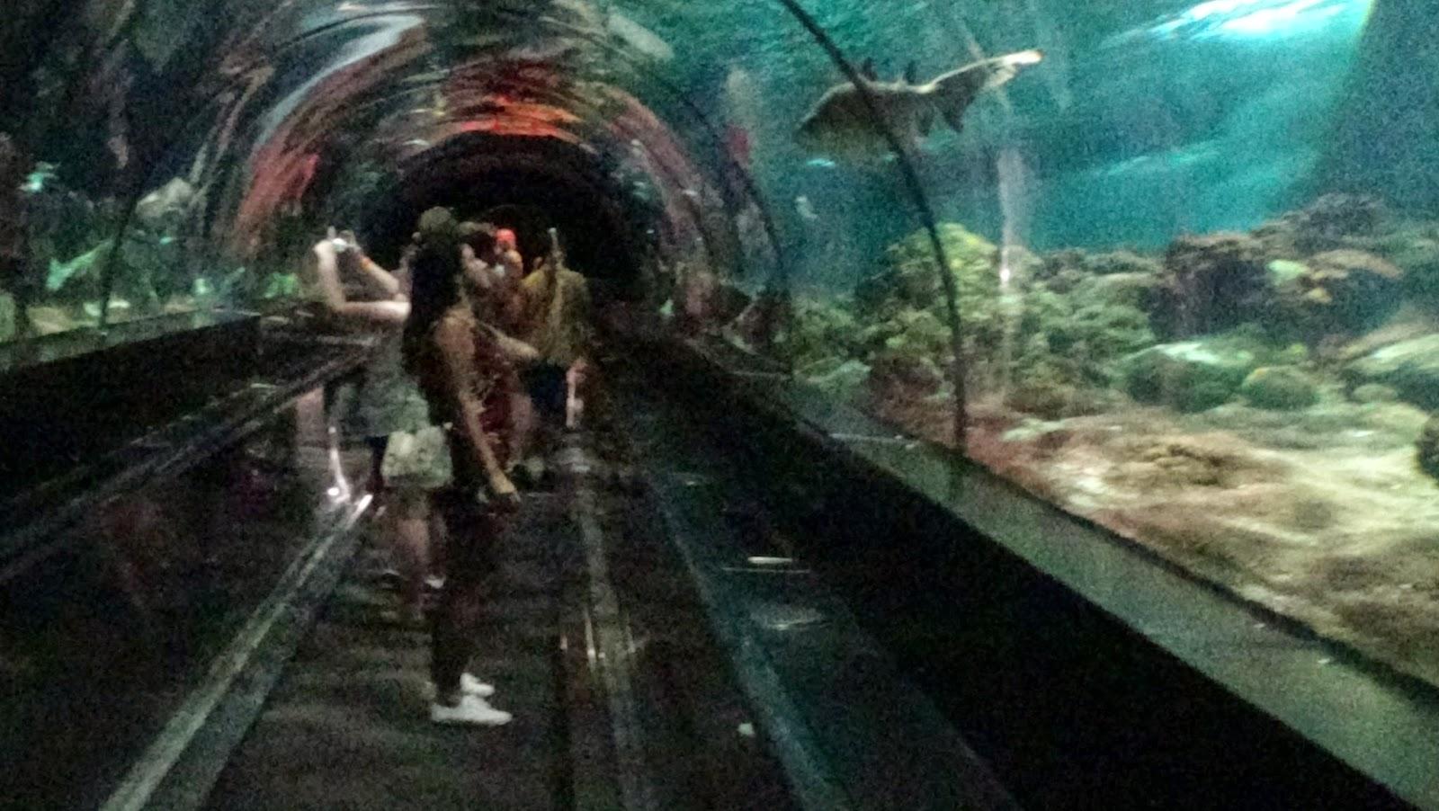 Parque Sea World Orlando