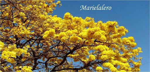 Marielalero