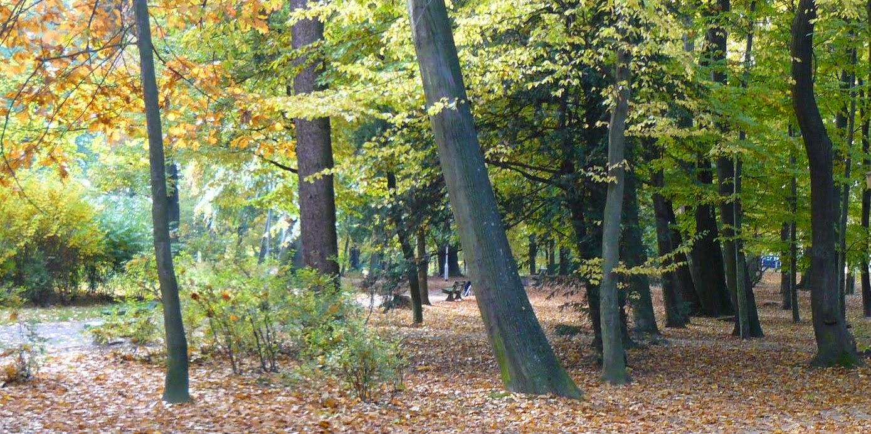 jesień spadające liście w polskim parku