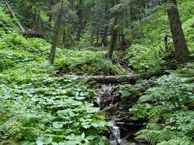 lasy Pilsko