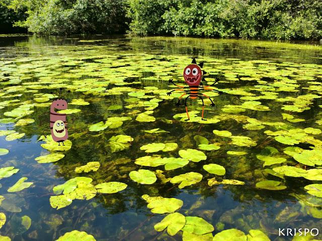 nenufares en un afluente del lago leon