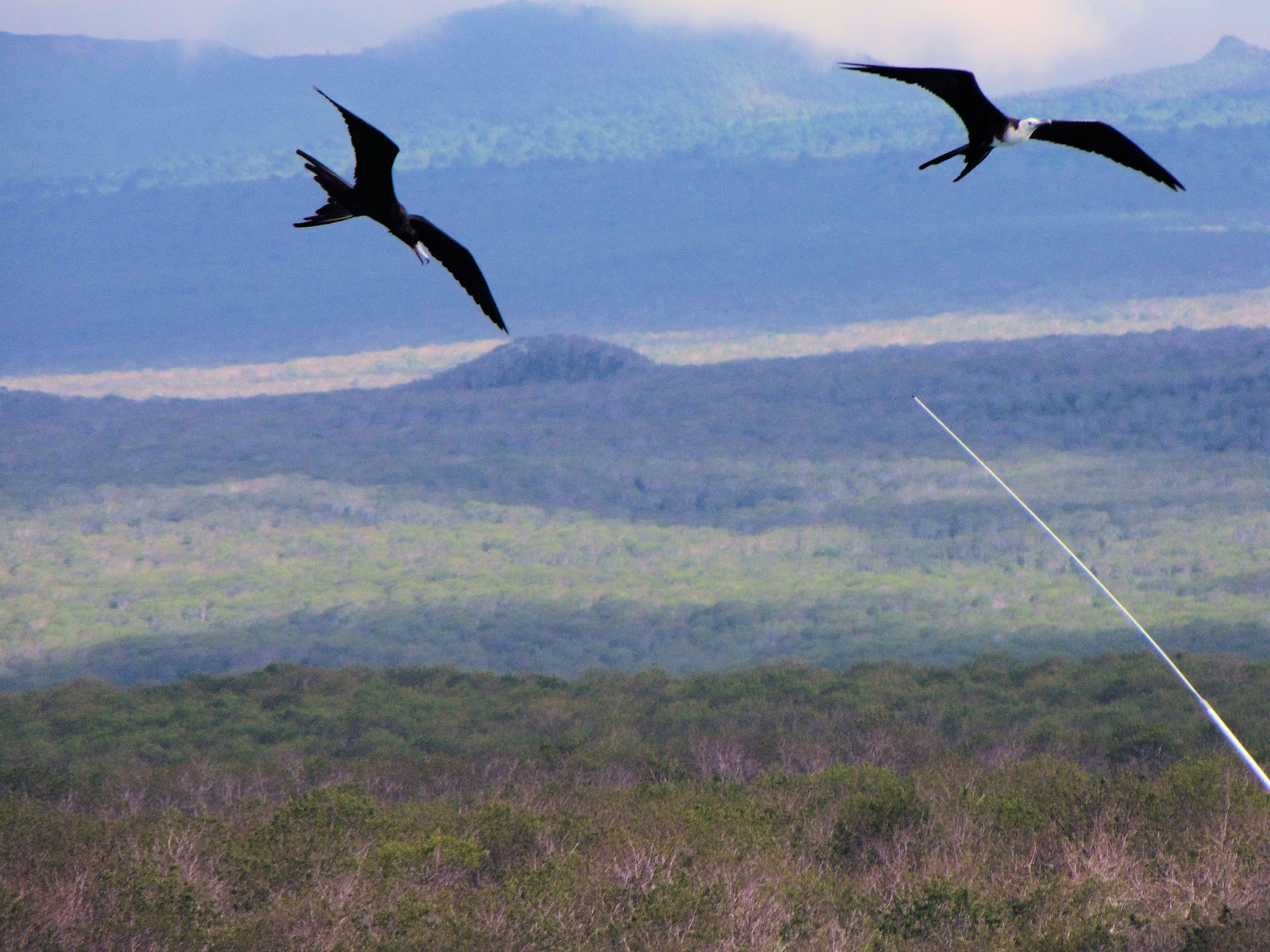 Frigate Birds Fly Above Bachas Beach