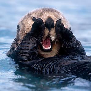 http://4.bp.blogspot.com/-8unLlI-znZg/Tc6ELCe4NTI/AAAAAAAAAIs/PeQXLzlj5Gc/s1600/sea-otter.jpg