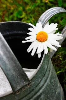Zonkarta- trädgårdsbloggare