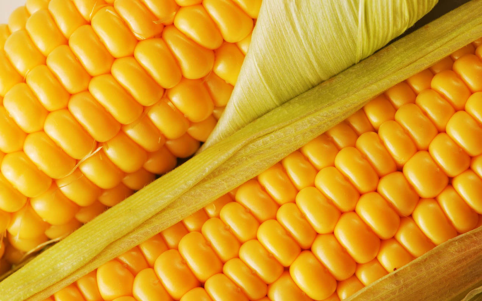 Fresh Corn ~ Desktop Wallpaper