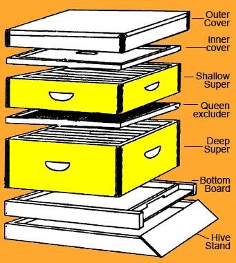 Sarah blogs  The    Beehive