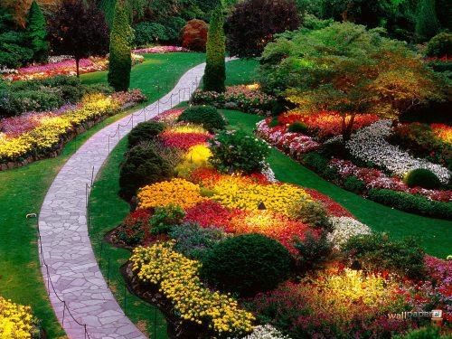 فن عمارة الحدائق المنزلية 2014  Beautiful-gardens-manly-34