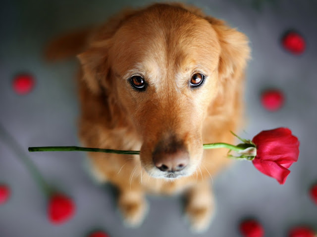 Cute Dog dogs