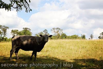 Blog, Food Photography, pet photographer, Photographer, Photography, Second Ave Photography, Virginia Food Photography, Virginia photographer, Wine