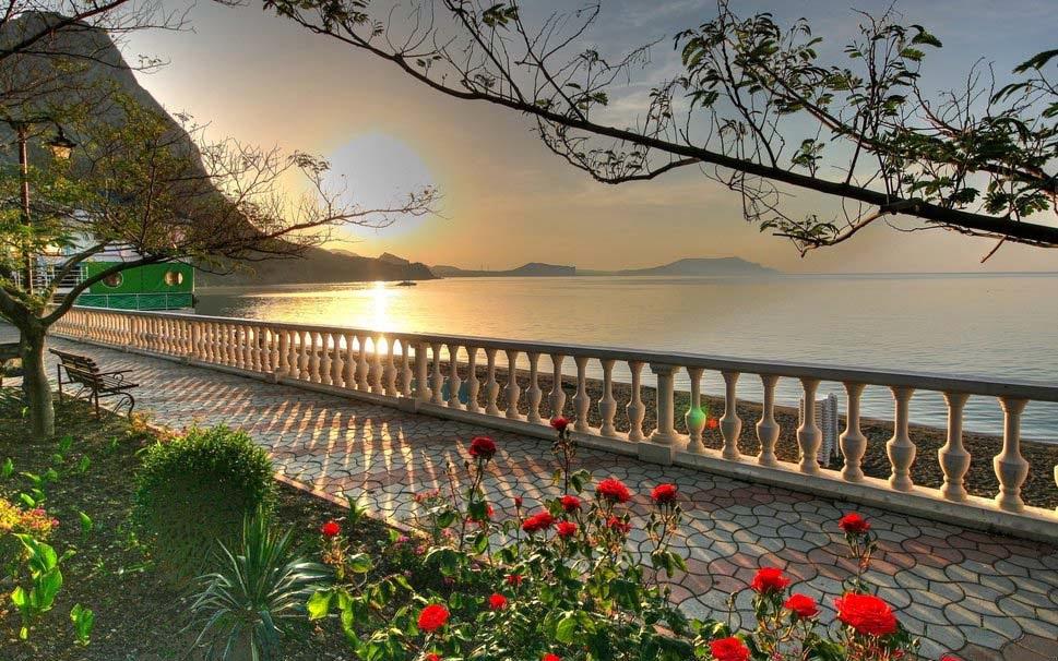 sea-sun-sky-flower-tree-beach-good-morning