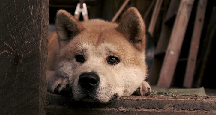 Hachiko!!!