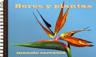 FOTOGRAFÍA: FLORES Y PLANTAS