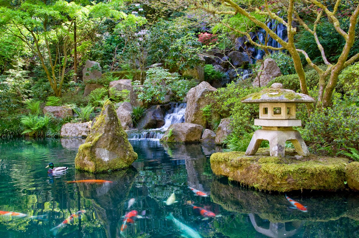 A storybook world the goldfish bowl a publishing analogy for Koi pond supply of japan