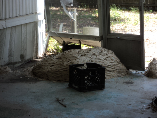 Davenport Yellow Jacket Removal: Huge Yellow Jacket nest in Fish camp