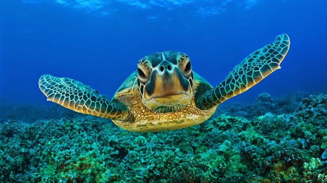 Imagenes de pequeñas Tortugas