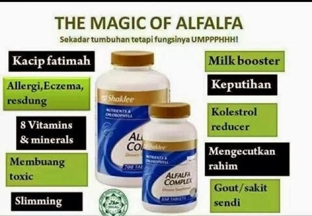 alfalfa kompleks memang best