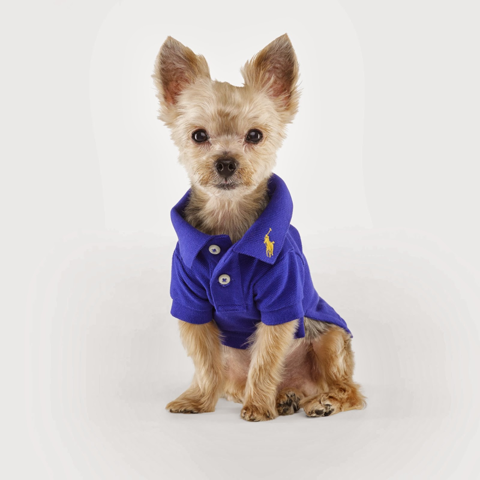 Ralph Lauren 'The Dog Walk' Accessories and Dog Clothing ...