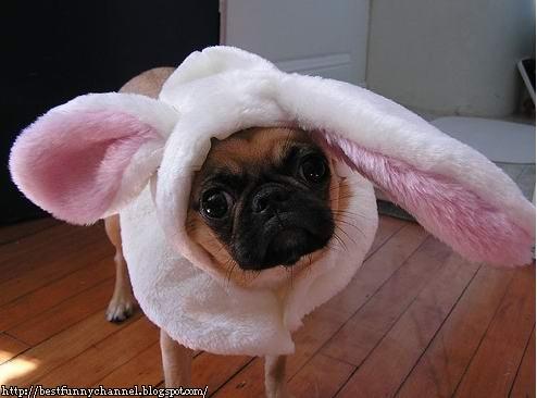Dog lamb