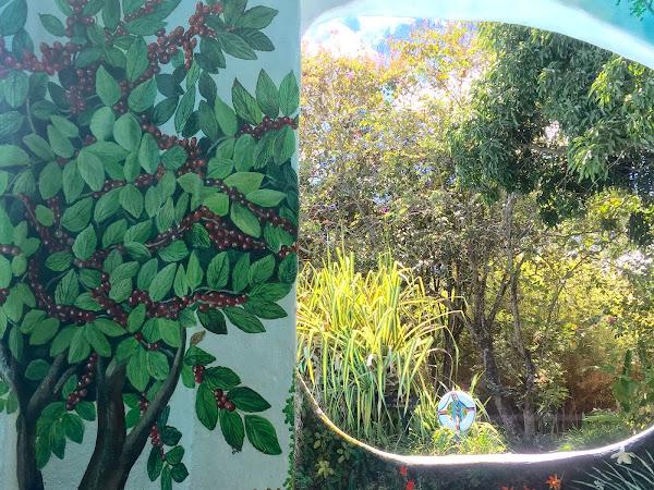 Costa Rican Honeymoon: Romantic Coffee Plantation