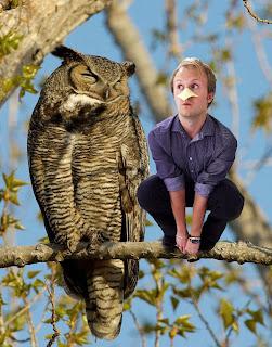 owling meme