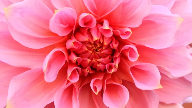 Flowers Wallpapers For Desktop Full Screen