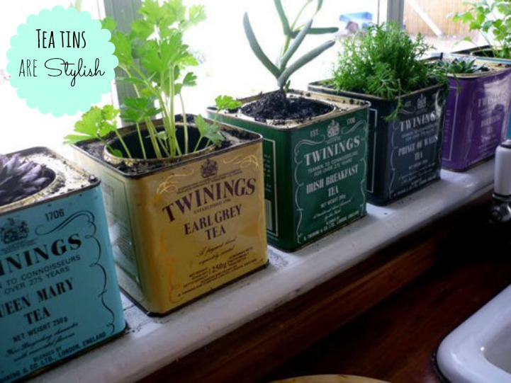 Tea tin herb garden