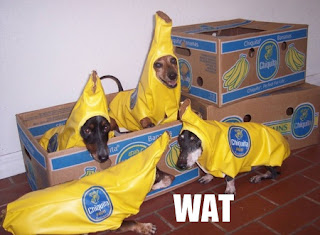 funny cute banana dogs