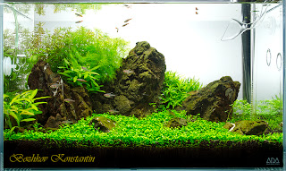 aquascape iwagumi