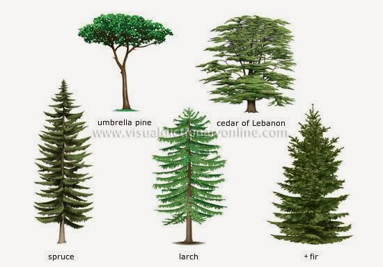 The english cubby types of plants for Different types of plants and trees