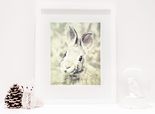 Bunny Rabbit Photography for Nursery and Home Wall Decor. You can purchase and download our photography creations and instantly print at home from our Paper Meadows Photography Shop on ETSY. To Visit our shop now click here.