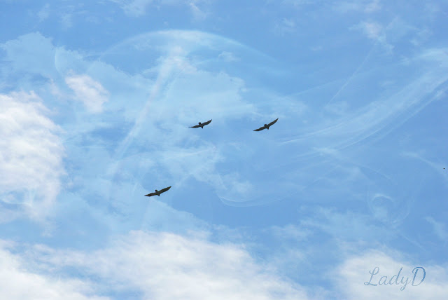 vultures in the sky