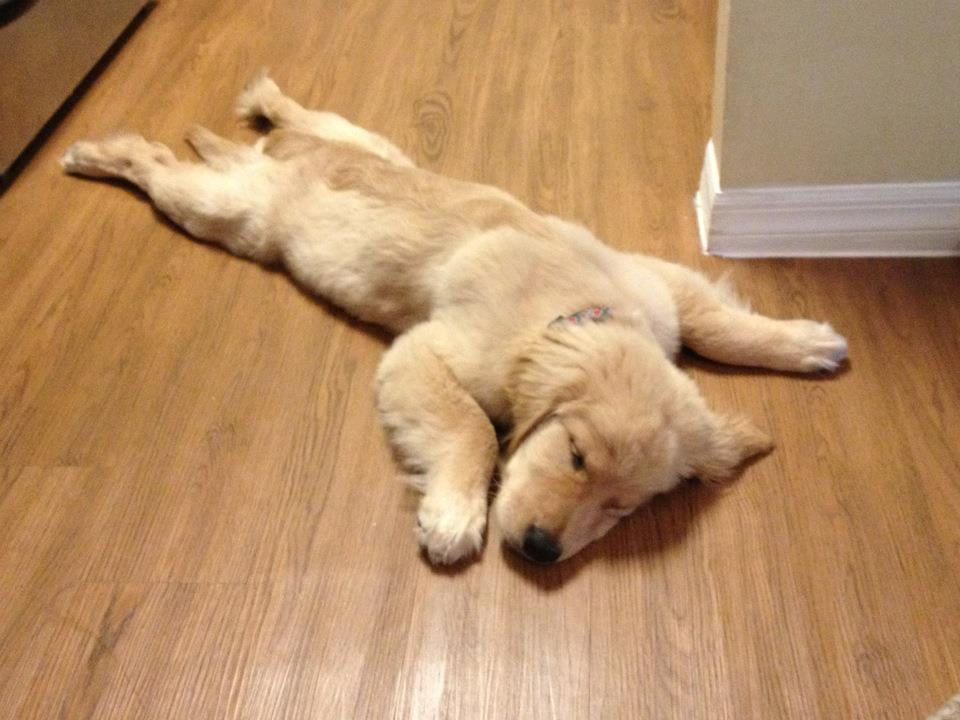 cute sleeping puppies  pics  love funny animal sweet funny animal photo   day