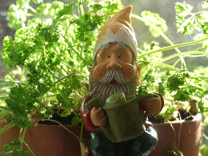Magickal Gardening: January 2012