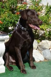 Puppy #4 - Lowe