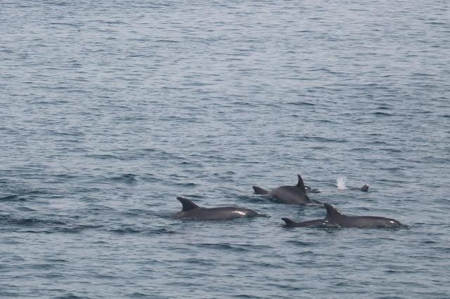 dolphin+trip.8.jpg