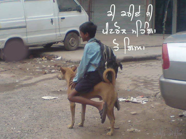 india s dog rider caught on camera  funny moment funny