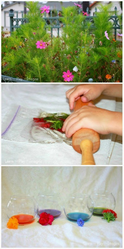 How to make natural watercolor paint from fresh flowers - hands on art and science for kids