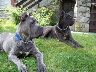 Addestramento Cinofilo I Feel My Dog Cani Da Guardia Quanti