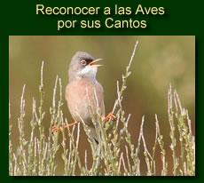 http://iberian-nature.blogspot.com.es/p/ruta-tematica-reconocer-las-aves-por.html