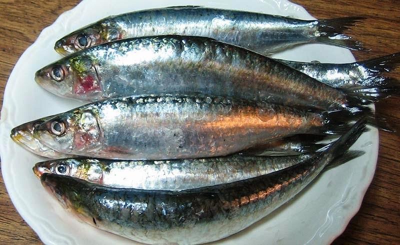Cachorro pode comer sardinha?