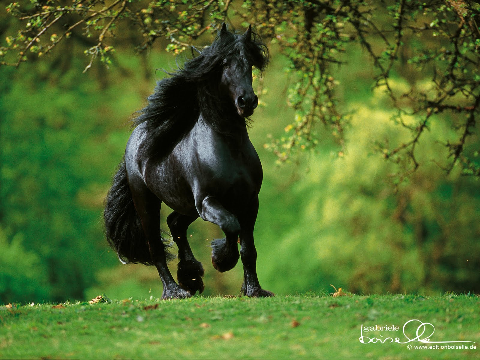 Animals Zoo Park: 12 Black Horse Wallpapers, Black Horses Beautiful