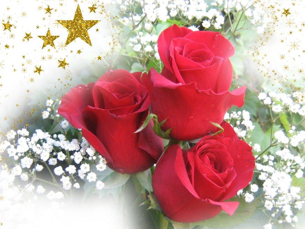 Imagenes De Flores De Rosas Rojas}