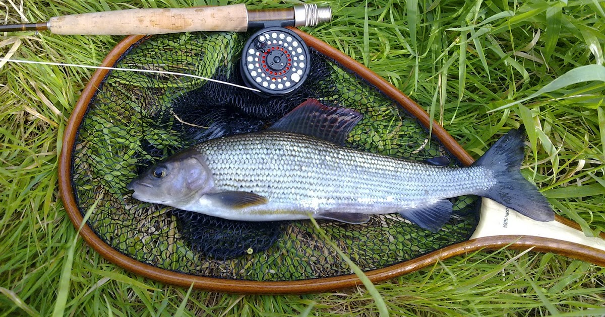 Go fishing with cadbury angling river itchen fly fishing for Fly fishing competitions