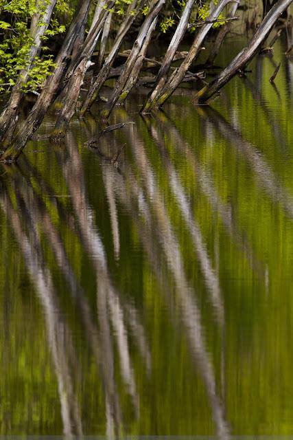 Overhangede bomen in water - hanging trees in the water